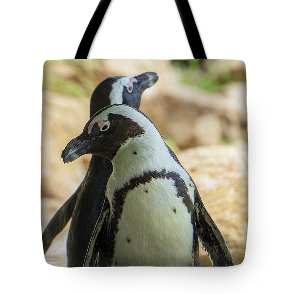African Penguins Posing Tote Bag
