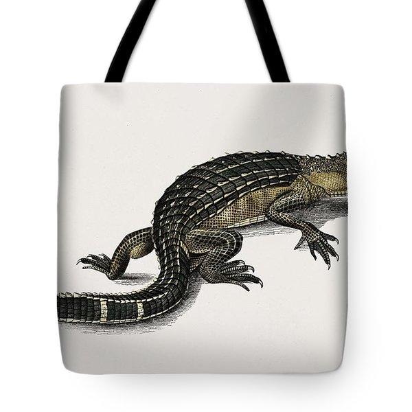 Alligator  Alligator Incius Illustrated By Charles Dessalines D' Orbigny  1806-1876  Tote Bag