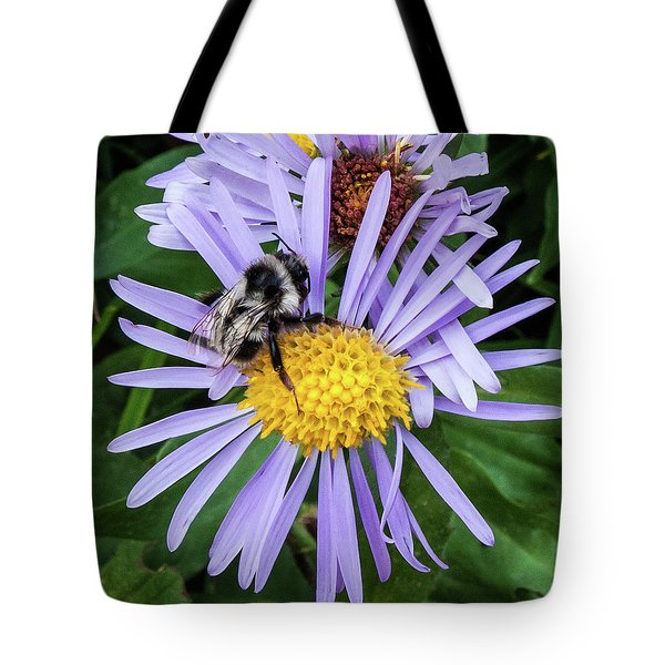 Tote Bag featuring the photograph Alpine Aster At Glacier National Park by Lon Dittrick