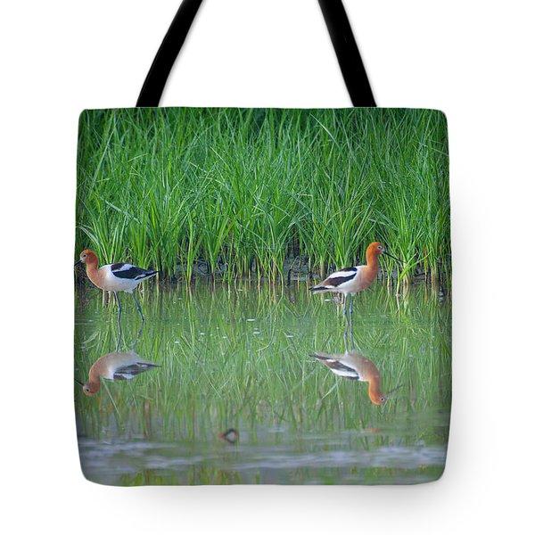 American Avocet Pair Tote Bag