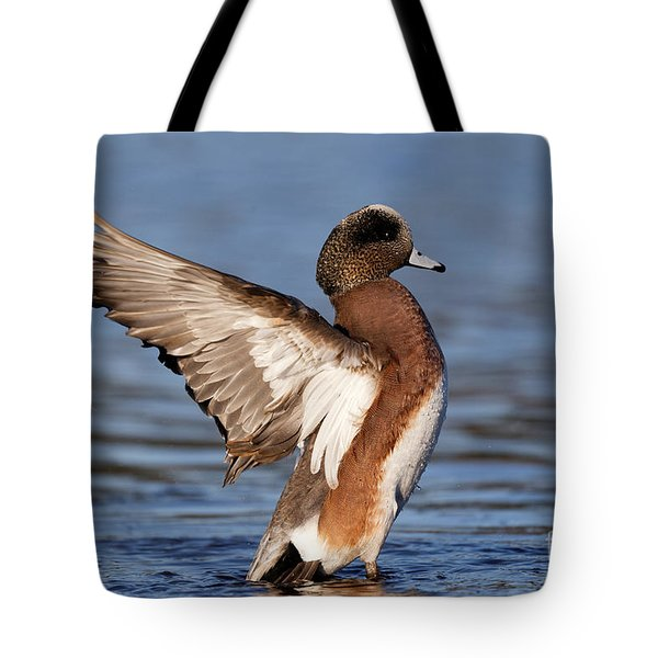 American Wigeon Delight Tote Bag