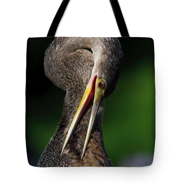 Anhinga Combing Feathers Tote Bag