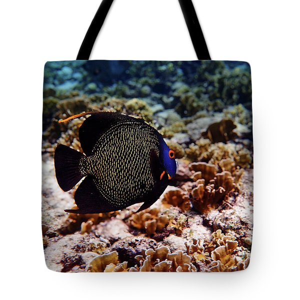 Tote Bag featuring the photograph Aruban French Angelfish by Lars Lentz