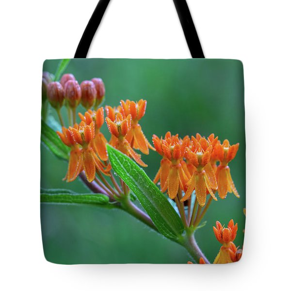 Tote Bag featuring the photograph Asclepias Tuberosa by Dale Kincaid