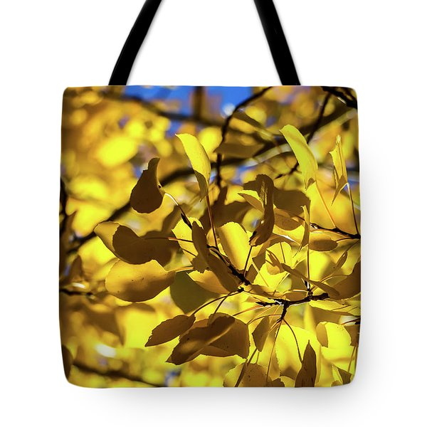 Aspens Up Close Tote Bag