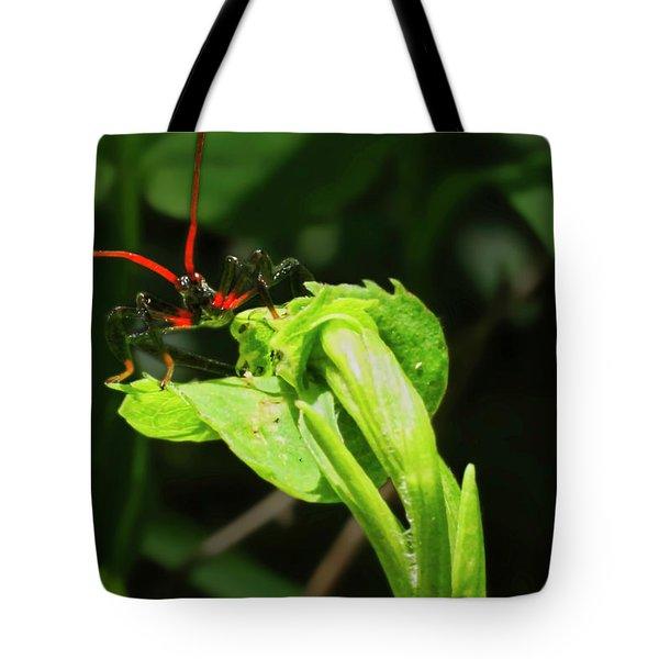 Assassin Bug Tote Bag