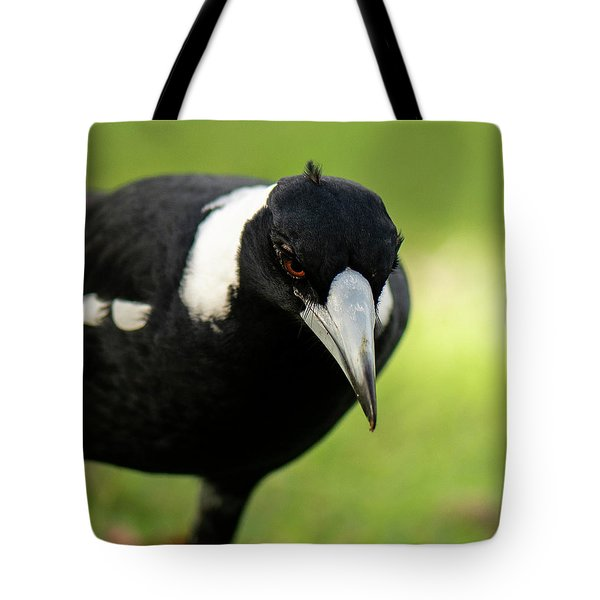 Australian Magpie Outdoors Tote Bag