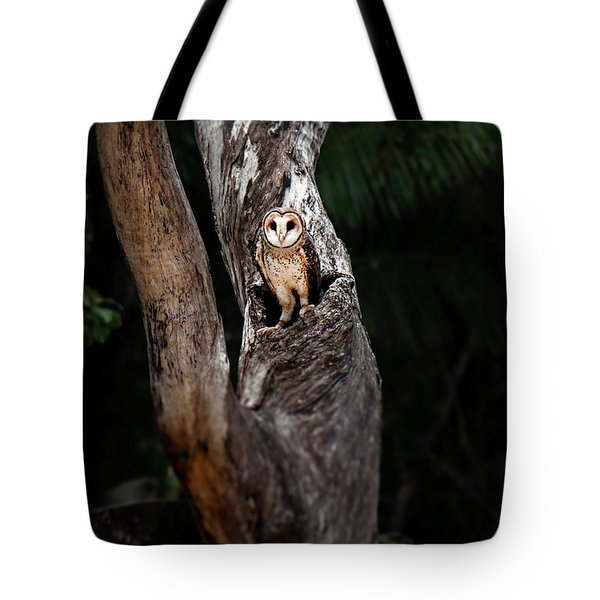 Tote Bag featuring the photograph Australian Masked Owl by Rob D Imagery