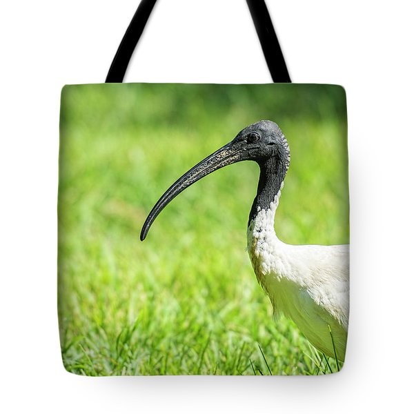Tote Bag featuring the photograph Australian White Ibis by Rob D Imagery