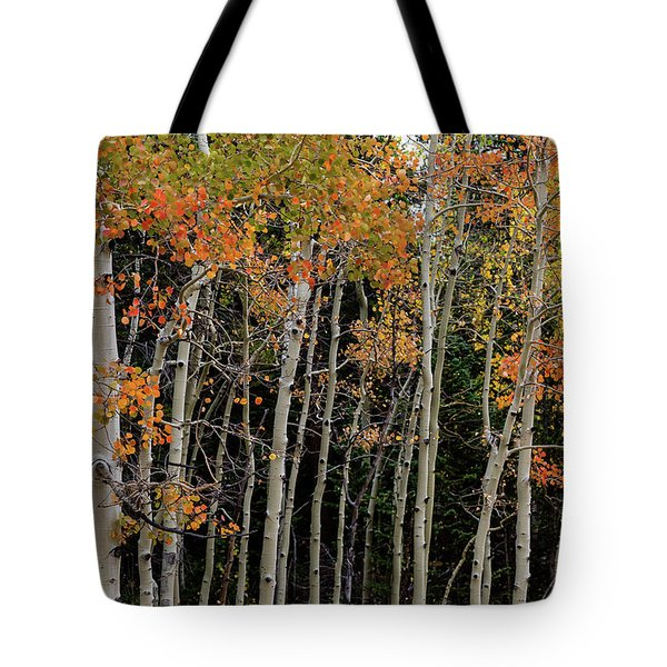 Tote Bag featuring the photograph Autumn As The Seasons Change by James BO Insogna