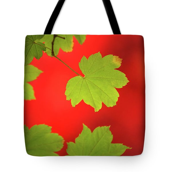 Tote Bag featuring the photograph Autumn by Bob Cournoyer