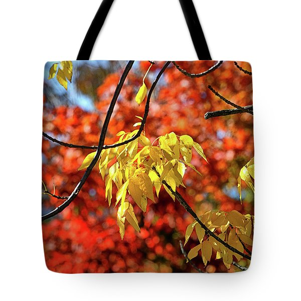Tote Bag featuring the photograph Autumn Foliage In Bar Harbor, Maine by Bill Swartwout Fine Art Photography