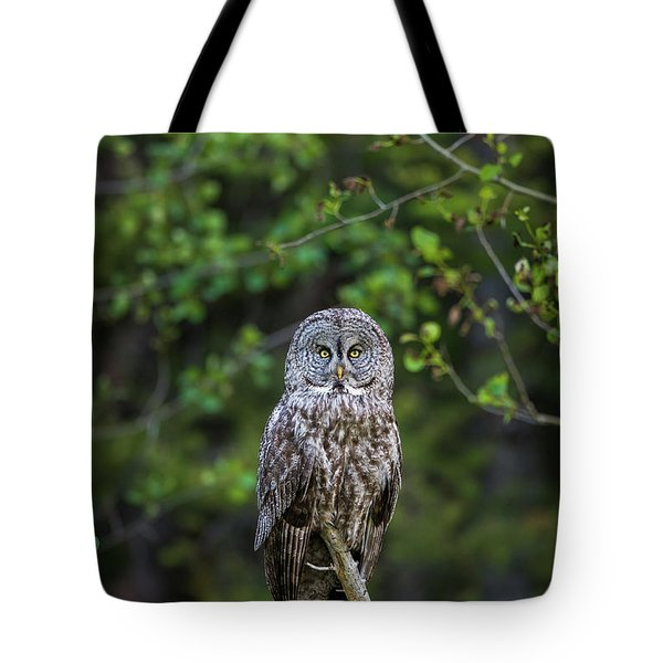 Tote Bag featuring the photograph B16 by Joshua Able's Wildlife