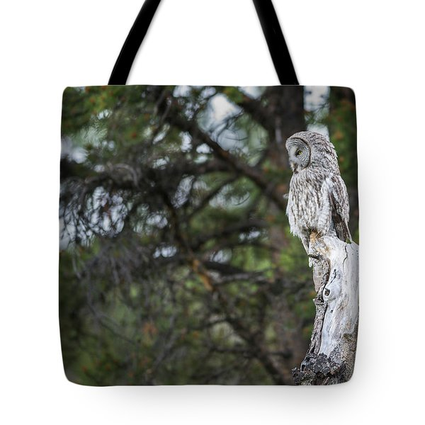 Tote Bag featuring the photograph B17 by Joshua Able's Wildlife