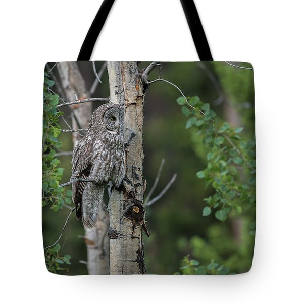 Tote Bag featuring the photograph B18 by Joshua Able's Wildlife