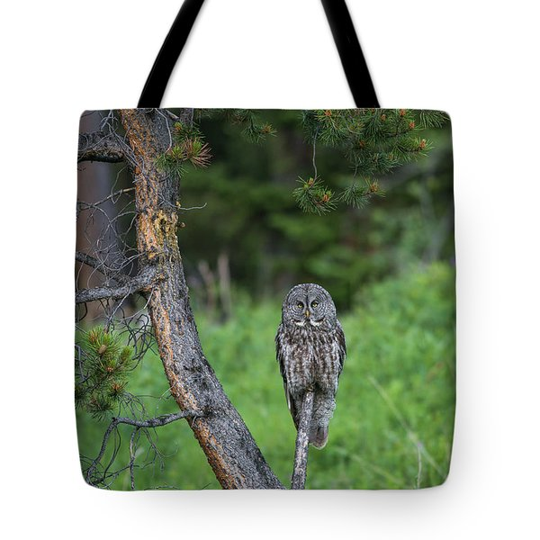 Tote Bag featuring the photograph B20 by Joshua Able's Wildlife