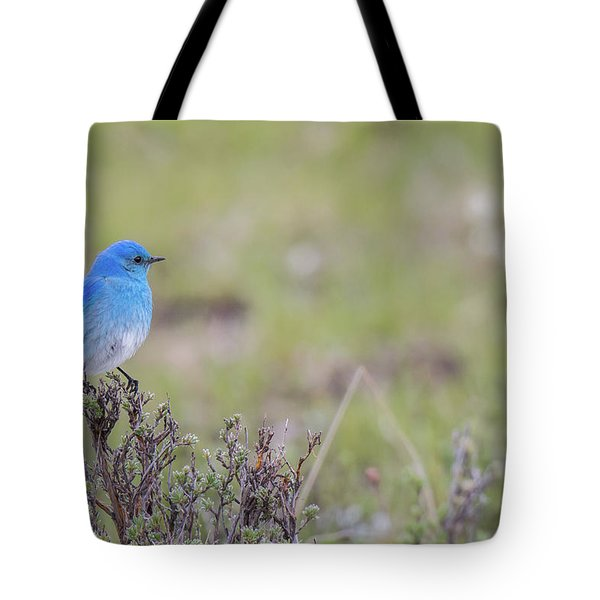 Tote Bag featuring the photograph B23 by Joshua Able's Wildlife