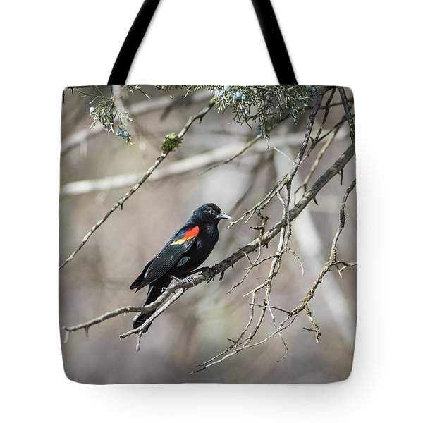 Tote Bag featuring the photograph B26 by Joshua Able's Wildlife