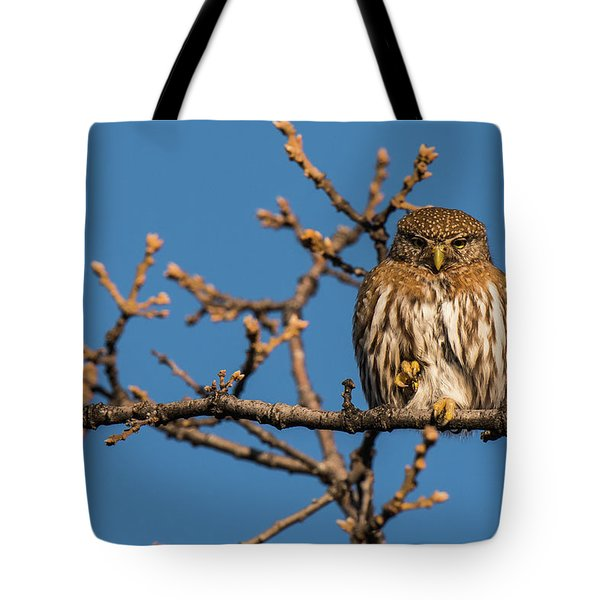 Tote Bag featuring the photograph B37 by Joshua Able's Wildlife