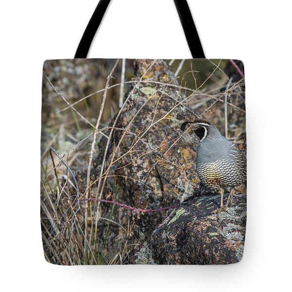Tote Bag featuring the photograph B53 by Joshua Able's Wildlife