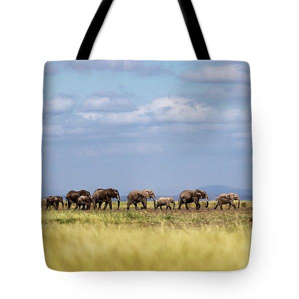 Baby Elephants Leading Herd In Line In Kenya Tote Bag