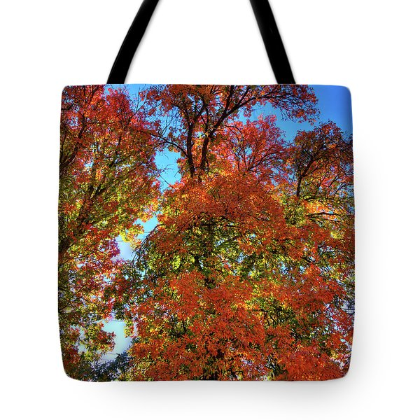 Tote Bag featuring the photograph Backlit Autumn by David Patterson