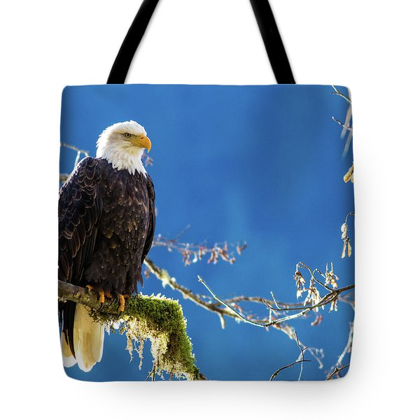 Backlit Bald Eagle In Squamish Tote Bag
