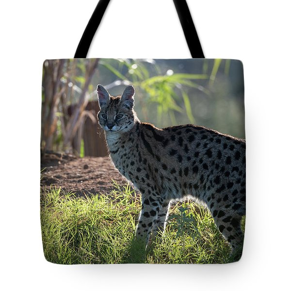 Backlit Serval Tote Bag