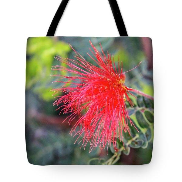 Baja Fairy Duster Tote Bag