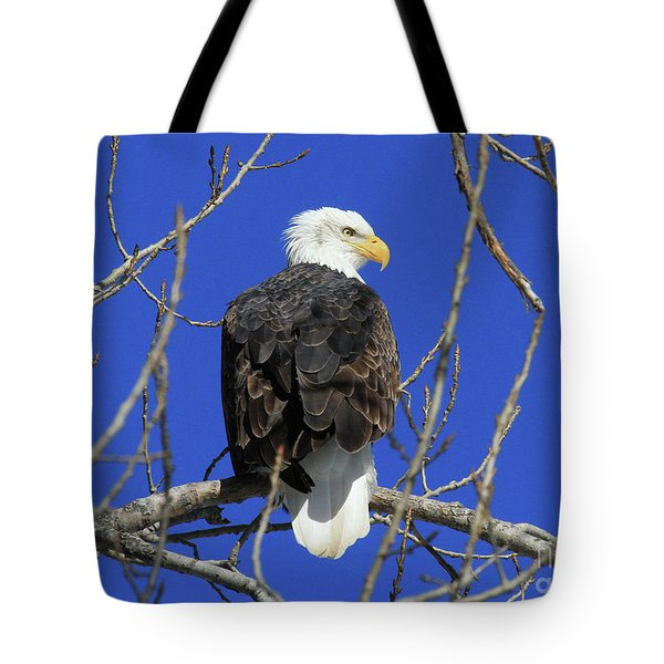 Bald Eagle And Blue Sky Tote Bag
