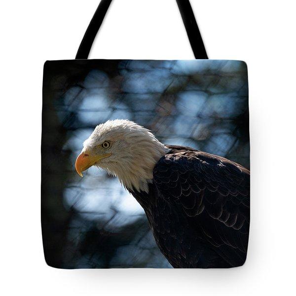 Bald Eagle Grandfather Mountain Tote Bag