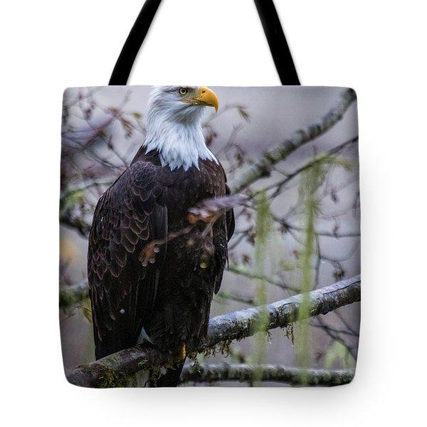 Bald Eagle In Rain Forest Tote Bag