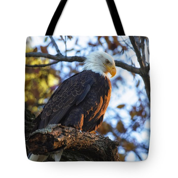 Tote Bag featuring the photograph Bandit by Lori Coleman