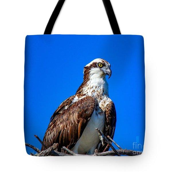 Beautiful Osprey Tote Bag