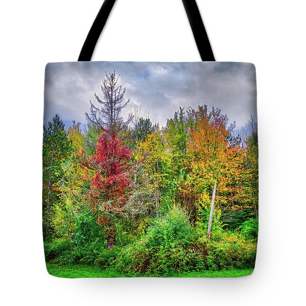 Tote Bag featuring the photograph Beauty In The Fall Forest by Lynn Bauer