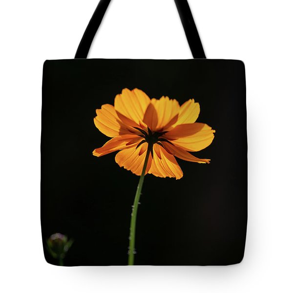 Tote Bag featuring the photograph Behind Light And Shadow by Dale Kincaid