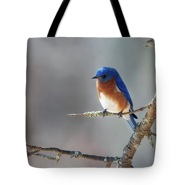 Big Meadows Early Spring Bluebird Tote Bag