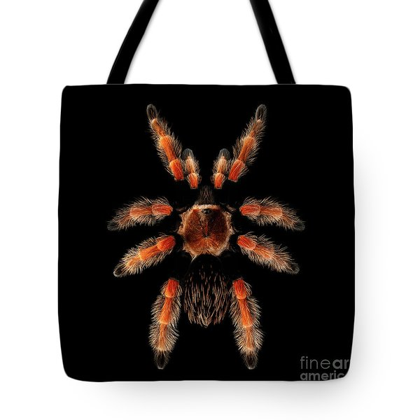 Big Spider Brachypelma Boehmei Tote Bag