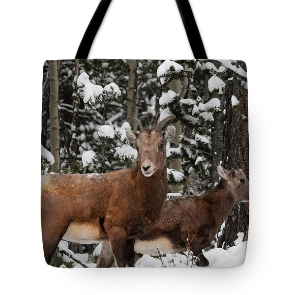 Bighorn Sheep In Deep Snow Tote Bag