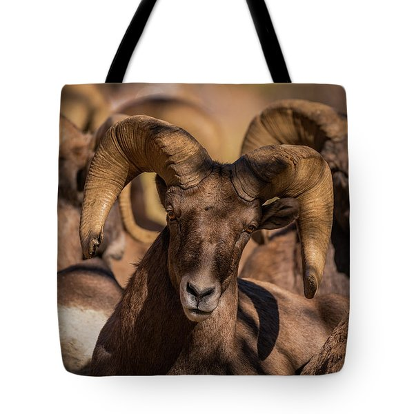 Bighorns Resting In The Afternoon Sun Tote Bag