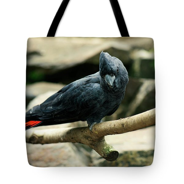 Black And Red Cockatoo. Tote Bag