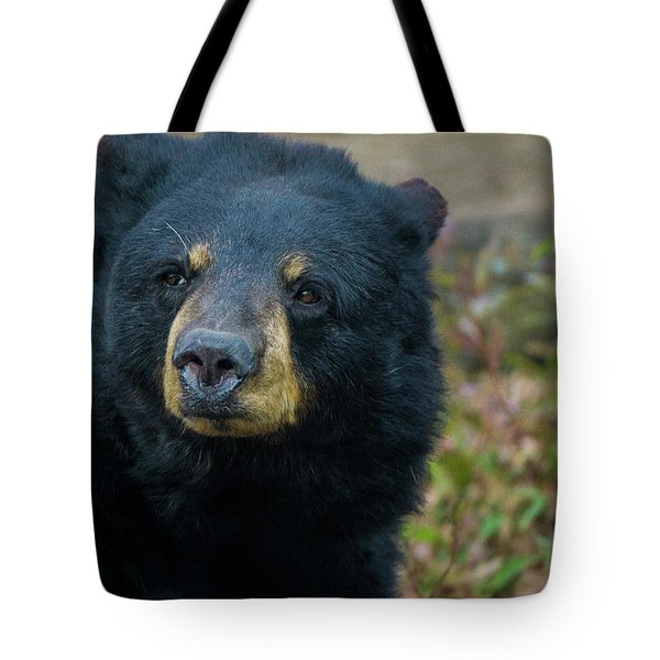 Black Bear In Deep Thought Tote Bag