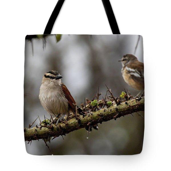 Black-crowned Tchagra And White-browed Scrub-robin Tote Bag