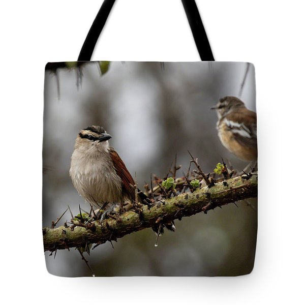 Tote Bag featuring the photograph Black-crowned Tchagra And White-browed Scrub-robin by Thomas Kallmeyer