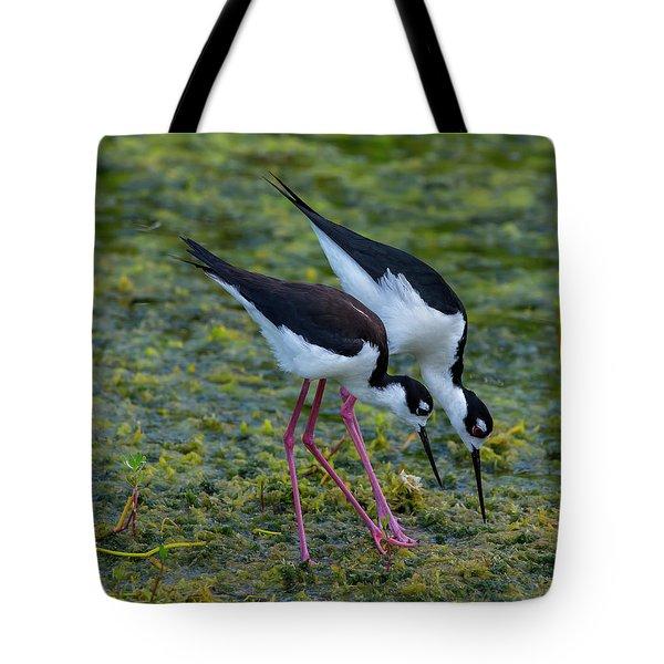 Black-necked Stilts Tote Bag