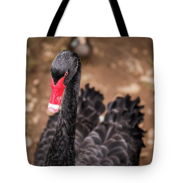 Tote Bag featuring the photograph Black Swan by Rob D Imagery