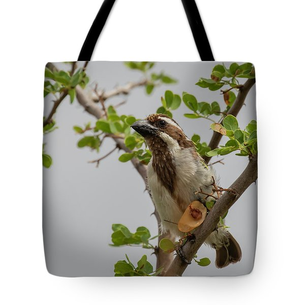 Tote Bag featuring the photograph Black-throated Barbet by Thomas Kallmeyer