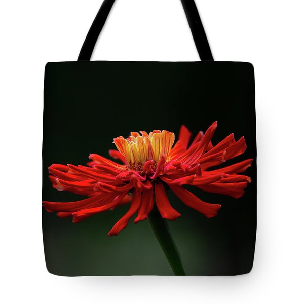 Tote Bag featuring the photograph Blazing Red by Dale Kincaid
