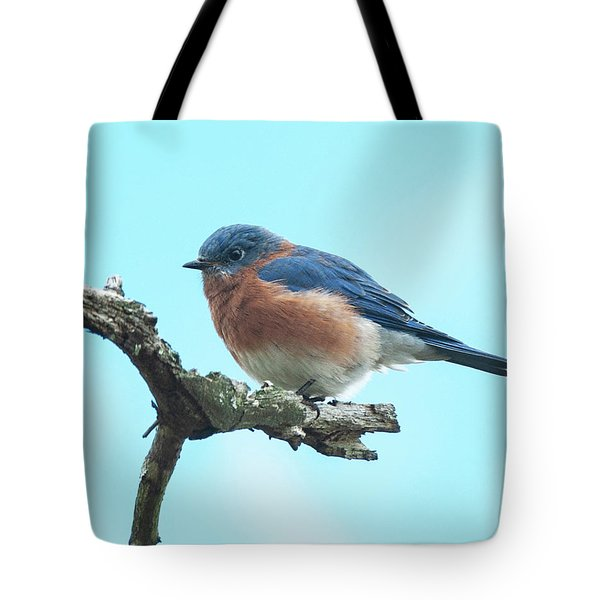 Blue On Blue Eastern Bluebird Tote Bag