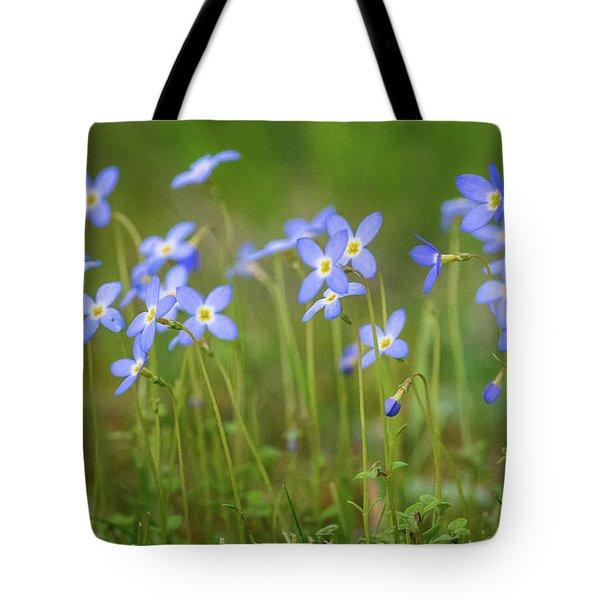Blue Wild Flowers Bluets Tote Bag